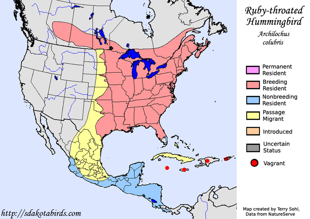 Ruby-throated Hummingbird - Archilochus colubris - Range Map