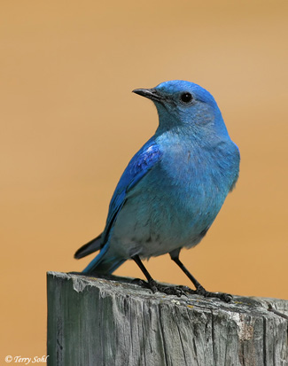 HCFS Builds Bluebird Boxes