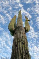 Saguaro Sky - Arizona