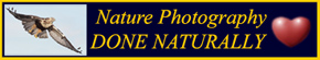 Nature Photography - Done Naturally! Click for Info
